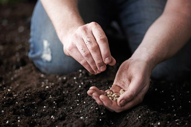 Planting Seeds During the New Moon