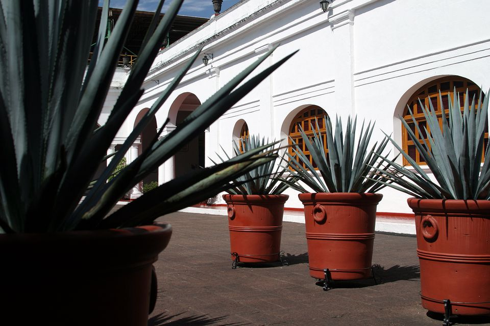 The Courtyard at La Quinta, the Distillery that produces Sauza Tequilas