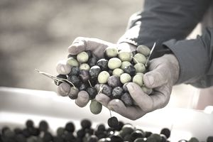 Man holding harvest of grapes representing gains and losses.