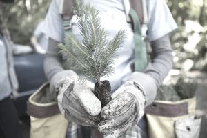 Volunteer holding a sapling ready for planting.
