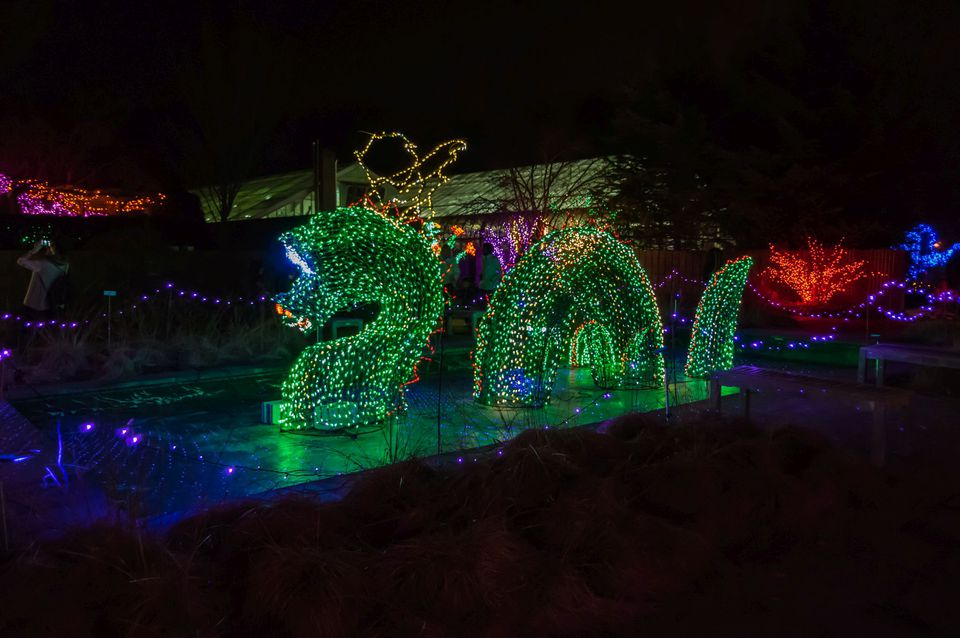 Dragon in lights