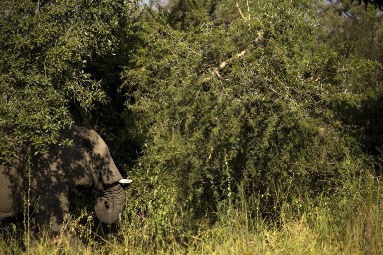 The Ivory Wars: The Fight Against Elephant Poaching in Central Africa