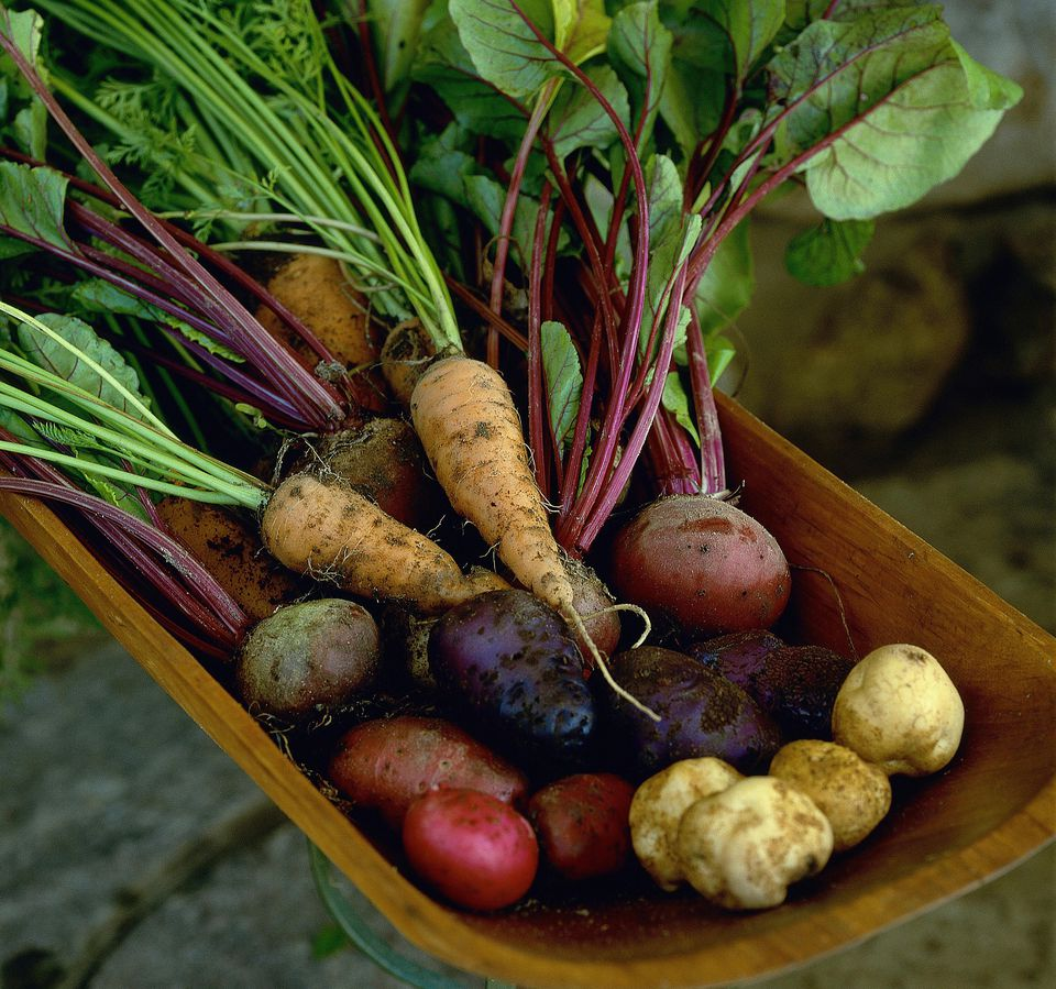 A bowl of fresh root vegetables