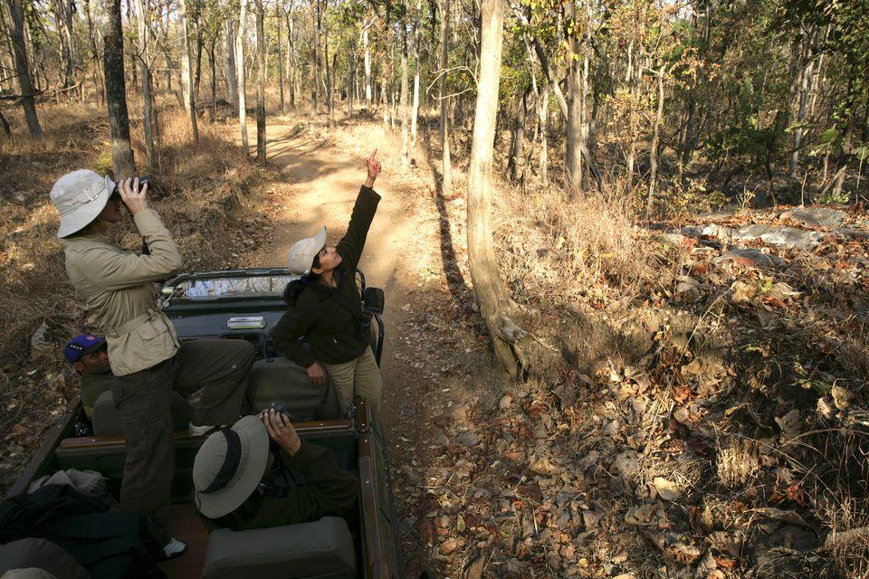 Safari in India.