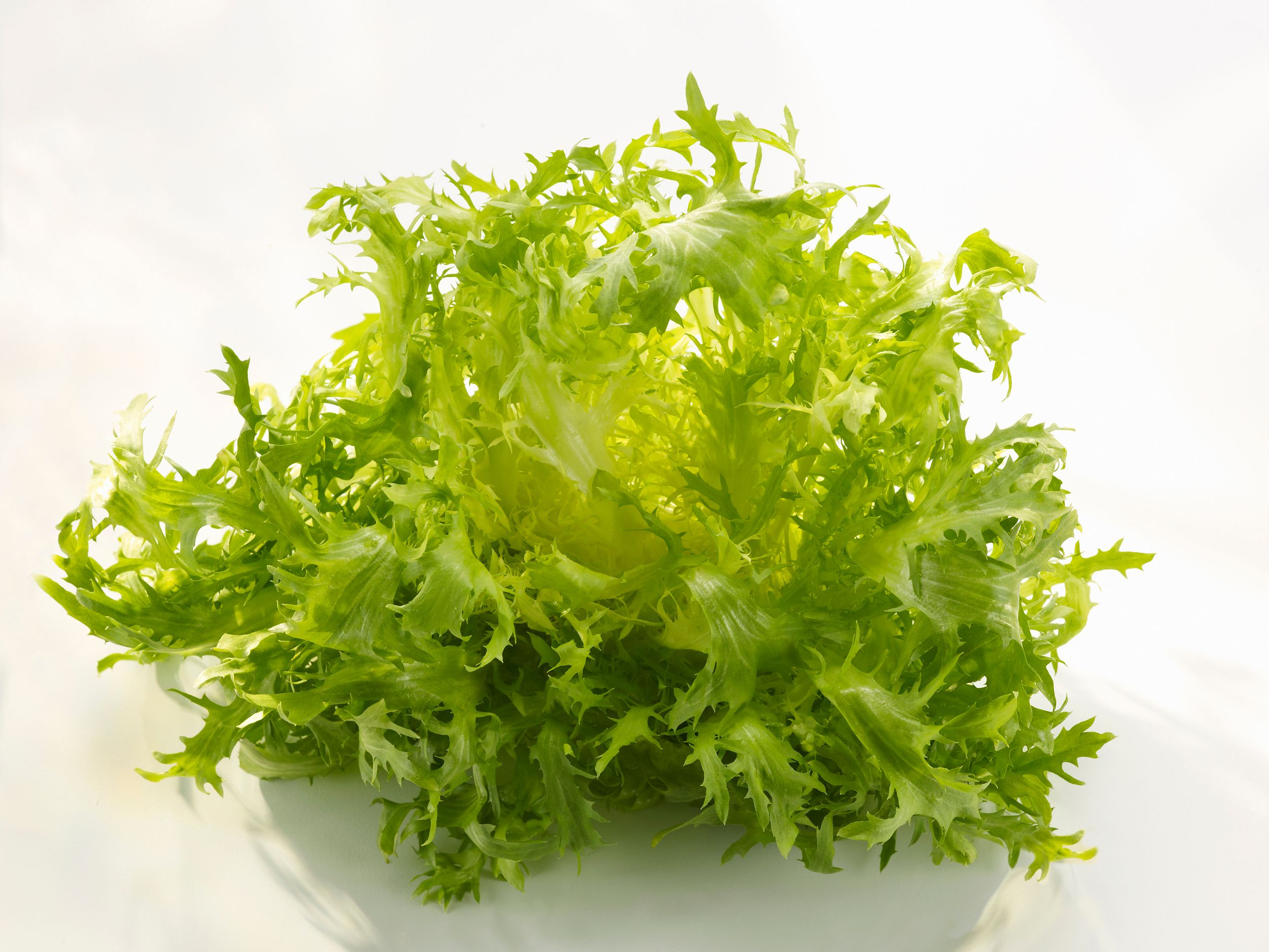 What Is Frisée? The Great Chicory-Endive-Escarole Mystery