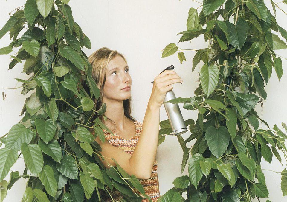 Woman Spraying Plant