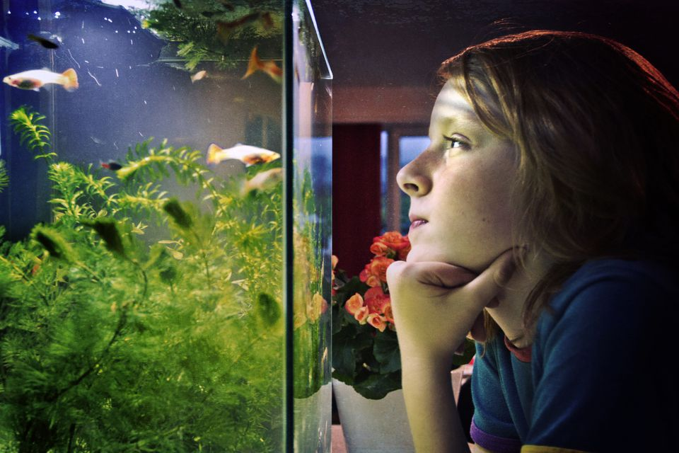 kid looking at fish tank
