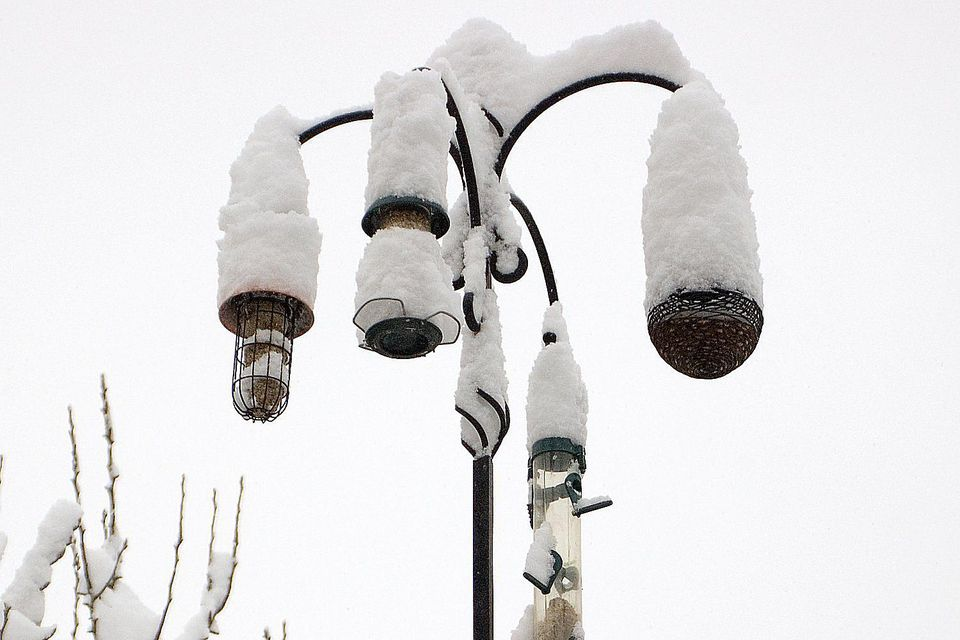 Snow Covered Bird Feeders