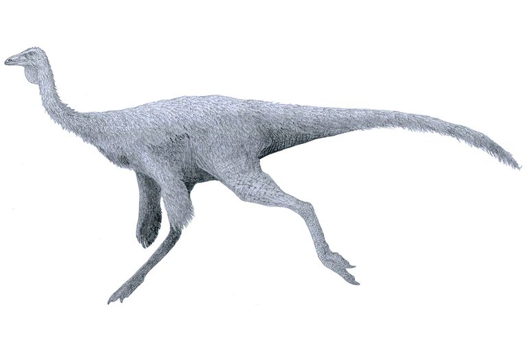 Saurolophus Was A Large Herbivorous Dinosaur With Single Horn Sticking Out Of The Back Its Head This First Discovered In North America
