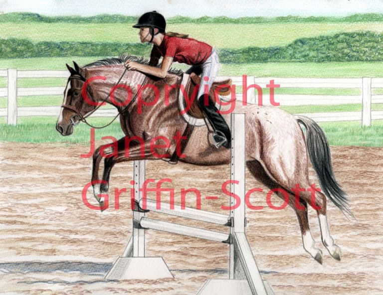 The competed drawing of horse and rider showjumping.
