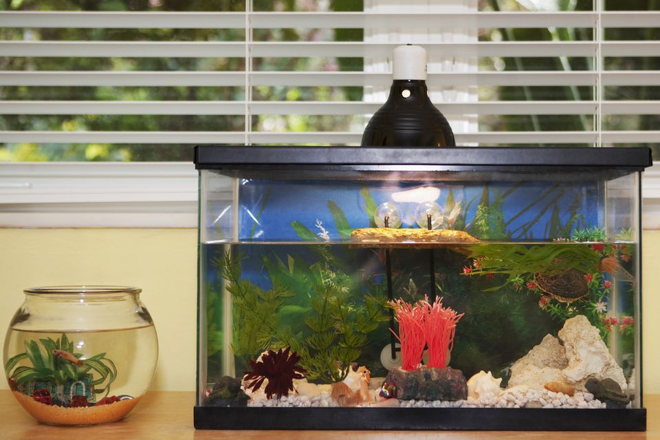 Fishbowl and an aquarium on a sideboard