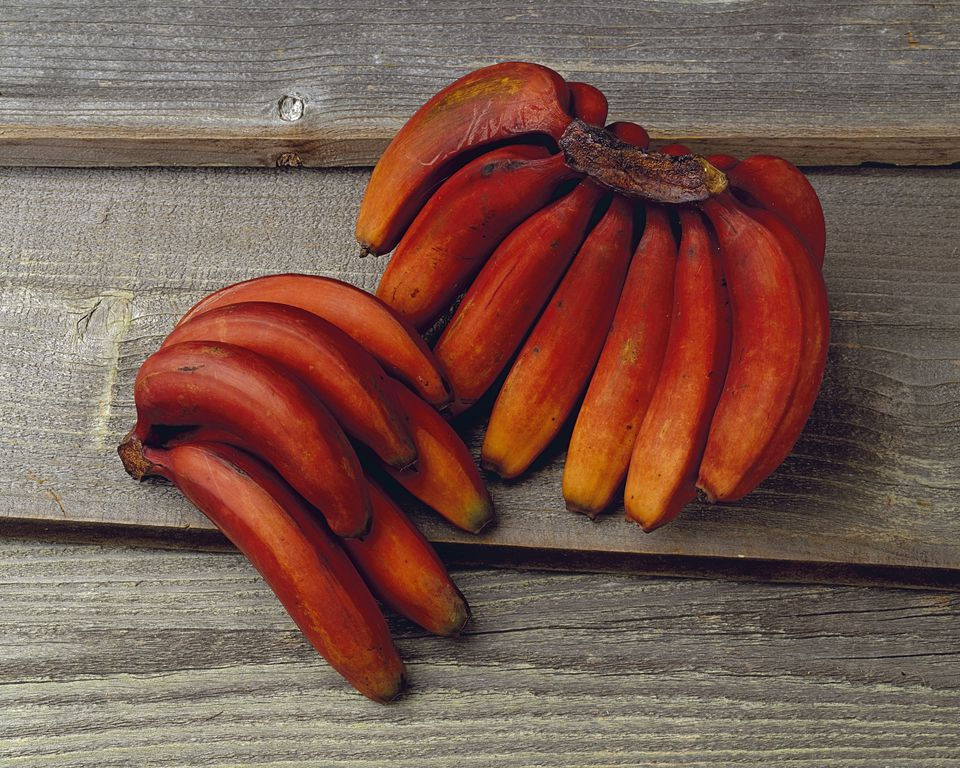 Bunch of Red Bananas