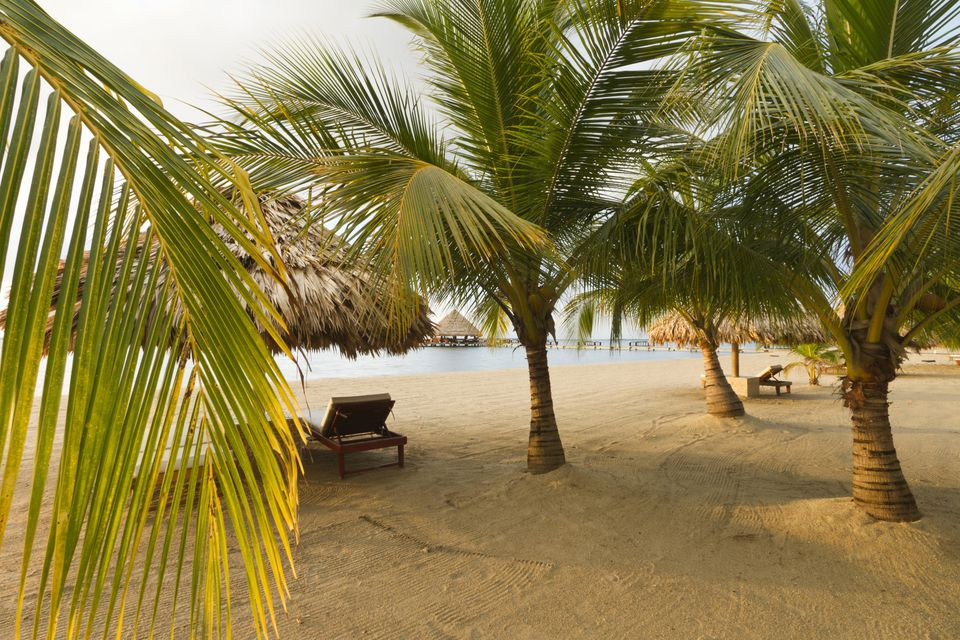 Palm trees on sandy beach, Placencia, Belize