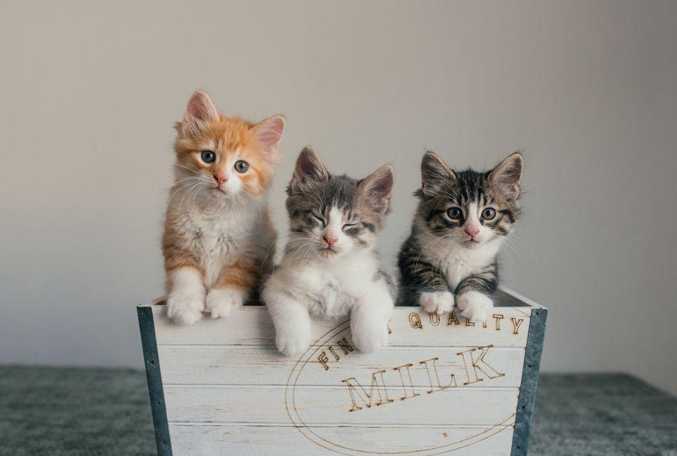 finding homes for kittens