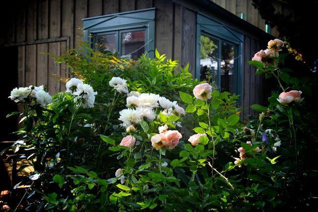 Frederick-Garden.jpg