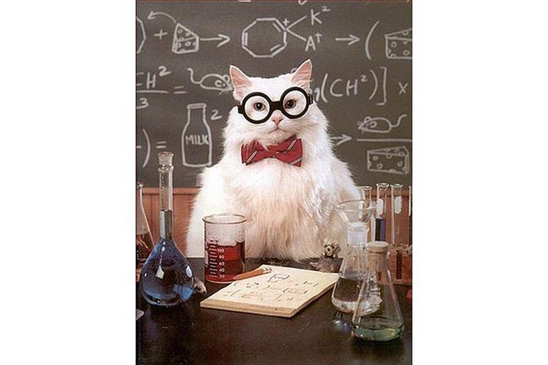 Best of chemistry cat science meme best of chemistry cat urtaz Gallery