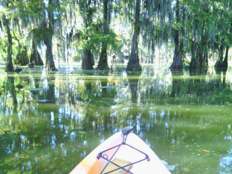 Louisiana swamp - kayak