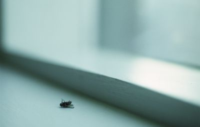 Little Black Bugs In Kitchen Tiny House Window