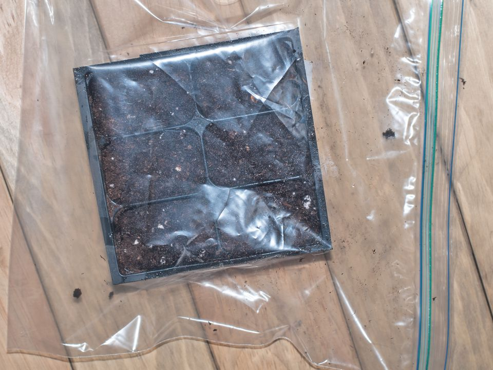 Create a Greenhouse for your Seeds.