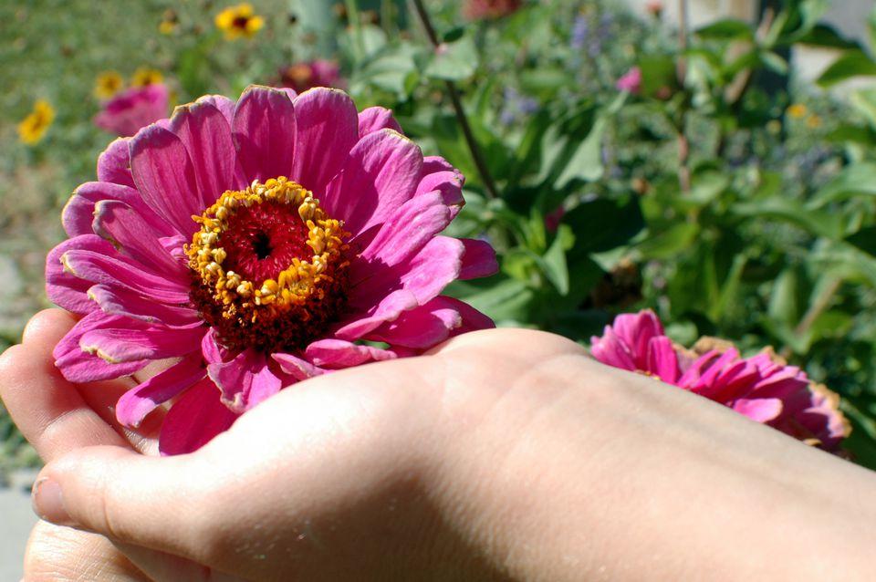 Dry Flowers with Borax