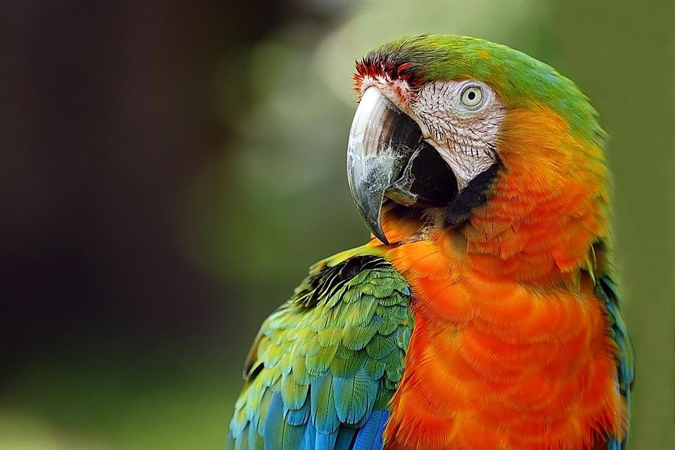 Macaw, exotic birds. Sarasota Jungle Gardens.