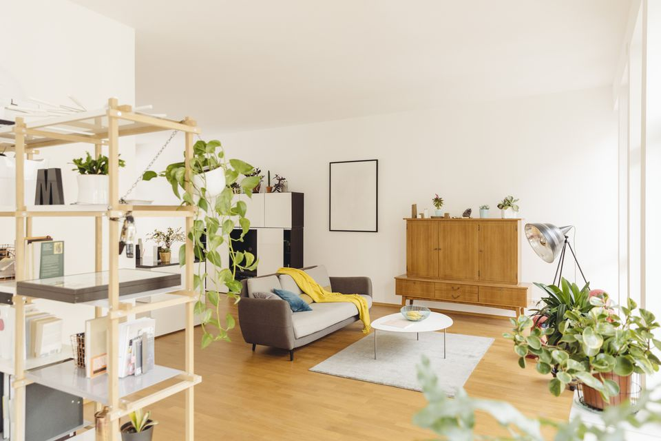 Living room with houseplants