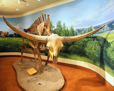 bison latifrons giant