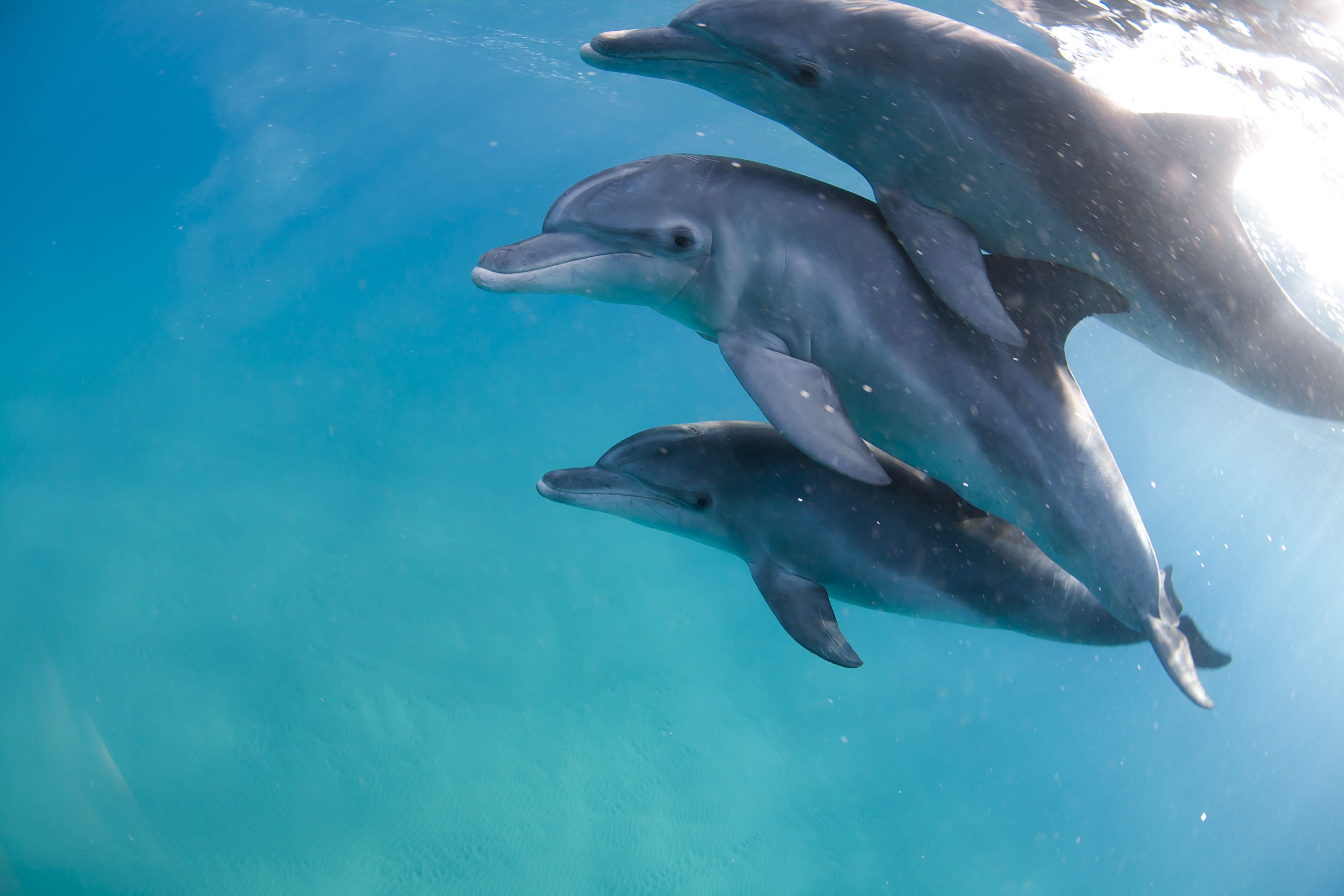 10 facts about dolphins