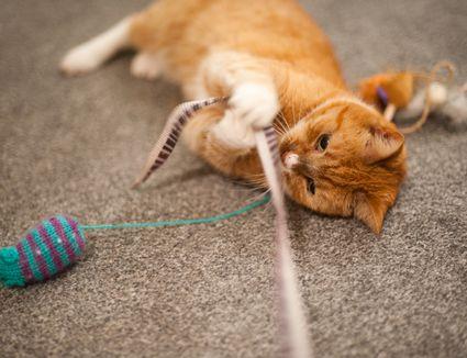 Play With Your Cat to Maximize Your Bond and Improve His Health