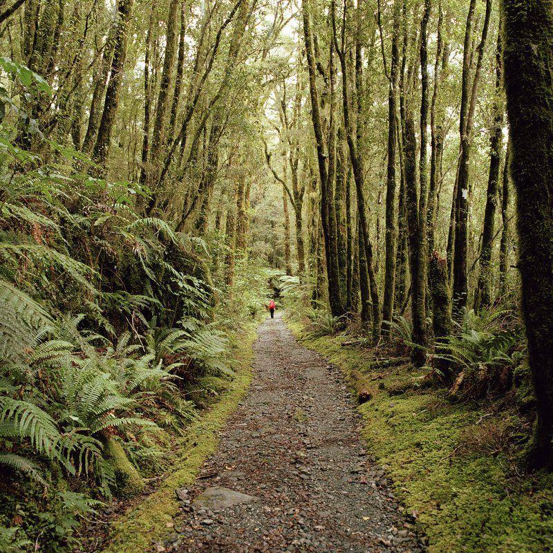 Milford Track, Fiordland National Park