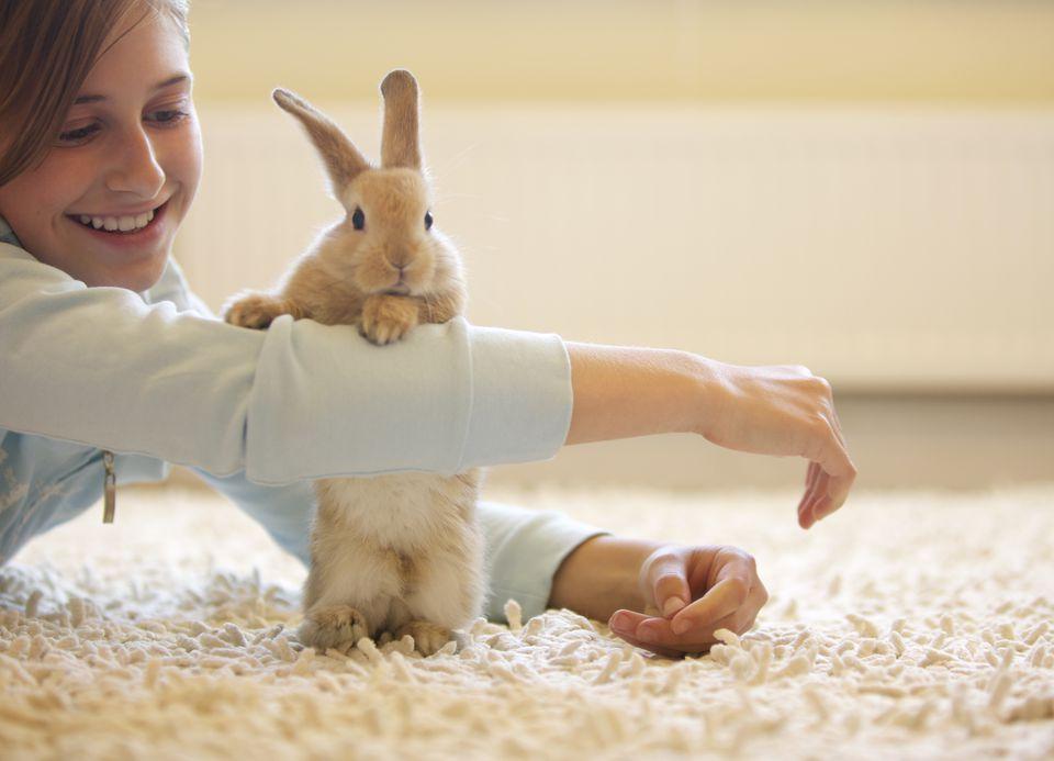 Rabbit Leaning against Girl's Arm