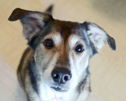 How to Prevent Canine Coronavirus How to Prevent Canine Coronavirus new photo