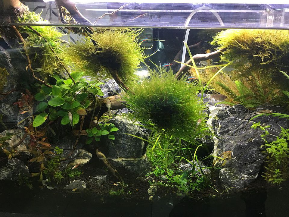 Freshwater aquarium with plants and fish