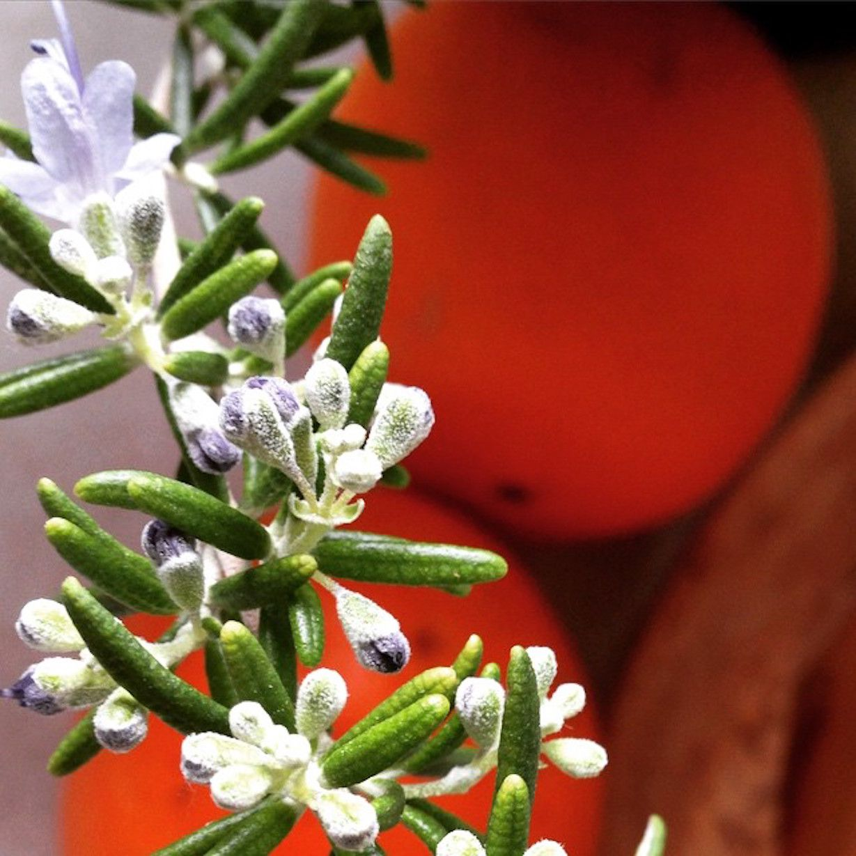 Improve feng shui of your kitchens with an herb garden - Tips imrove garden using feng shui ...