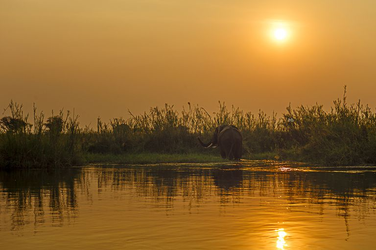 Elephant at Sunset in Zambia