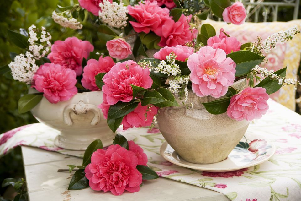 Camellia Flower Arrangement