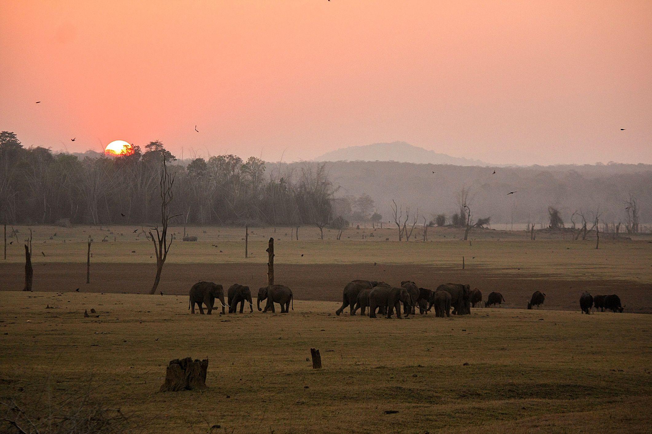 Nagarhole National Park India Essential Travel Guide