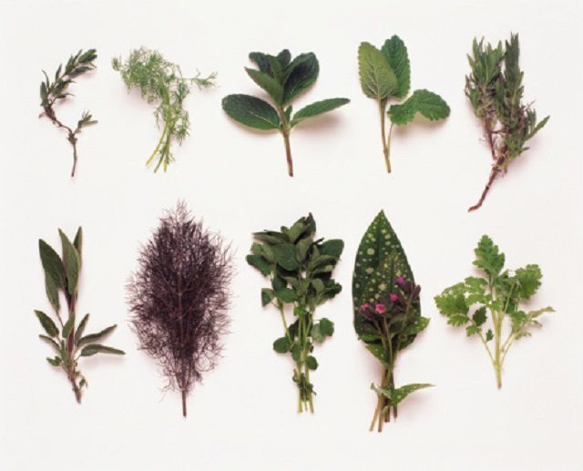 Selection of herbs, including Rosemary, Dill, Lemon Balm, Mint, Lavender, Sage, Marjoram, Lungwort, Feverfew