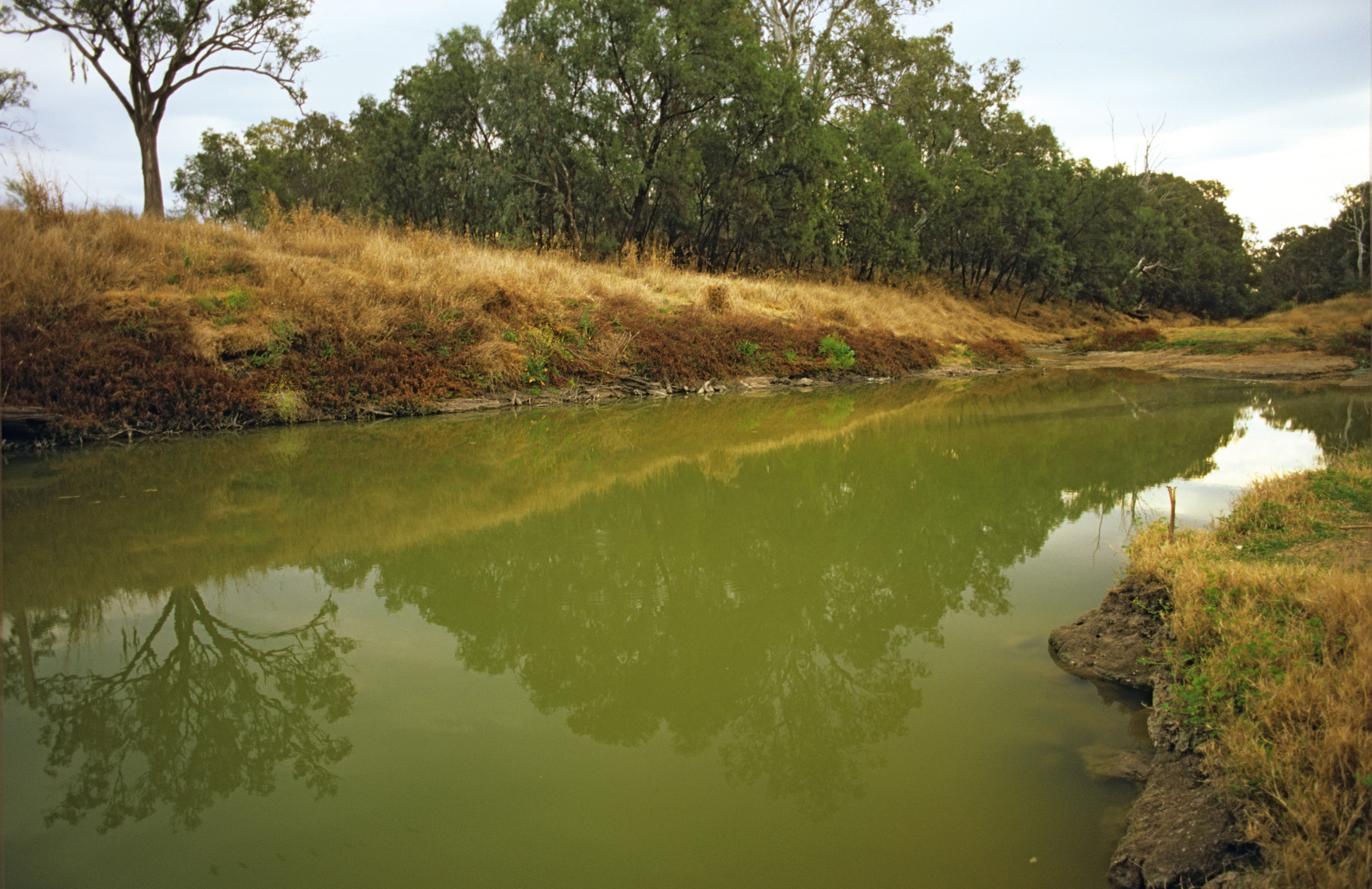 Eutrophication And Algal Blooms