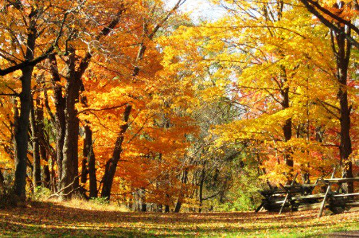 Autumn Foliage in Morristown, New Jersey