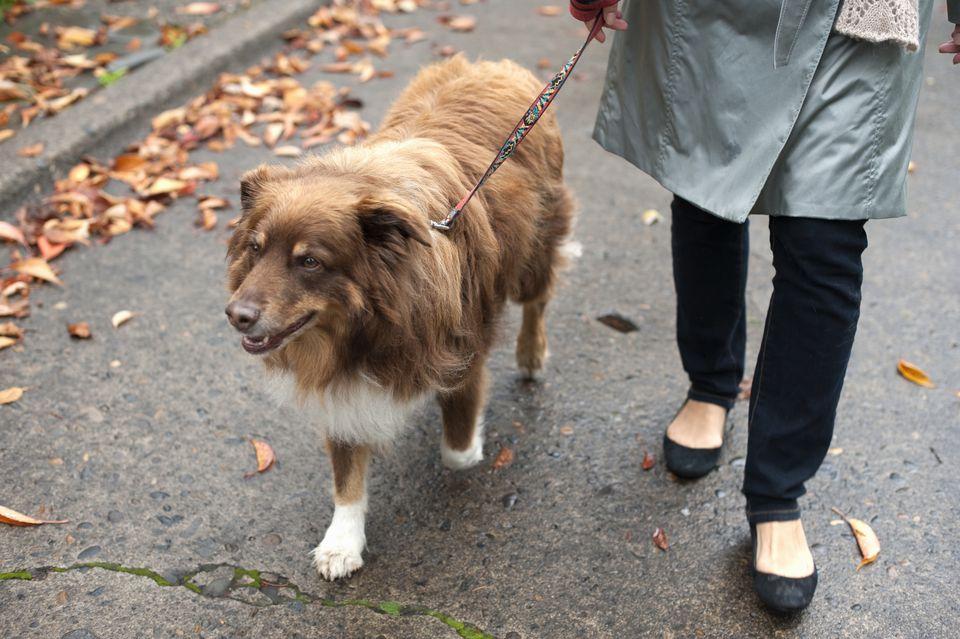 woman walking dog