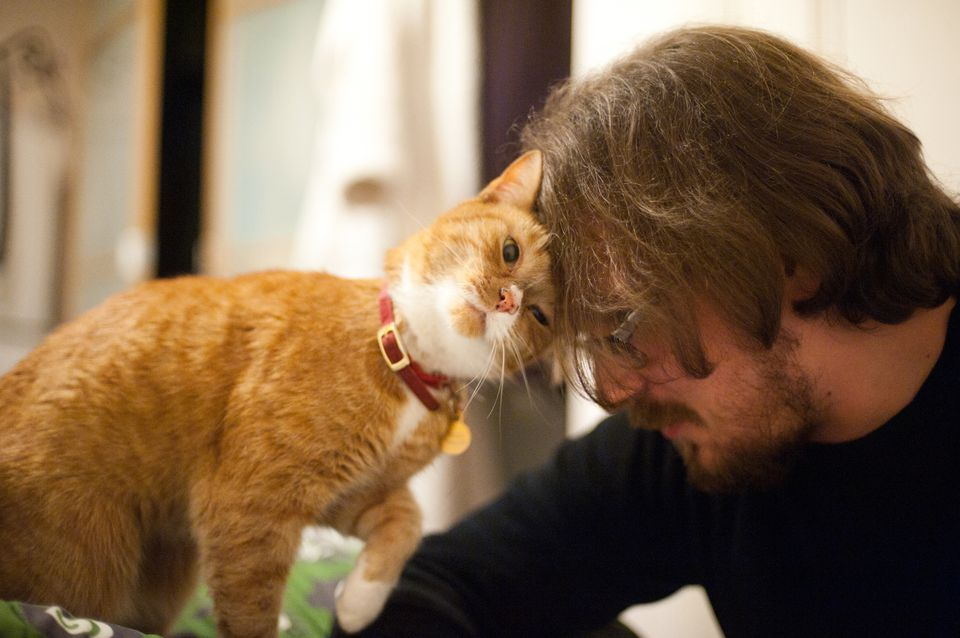 Image result for images of loving cat owners