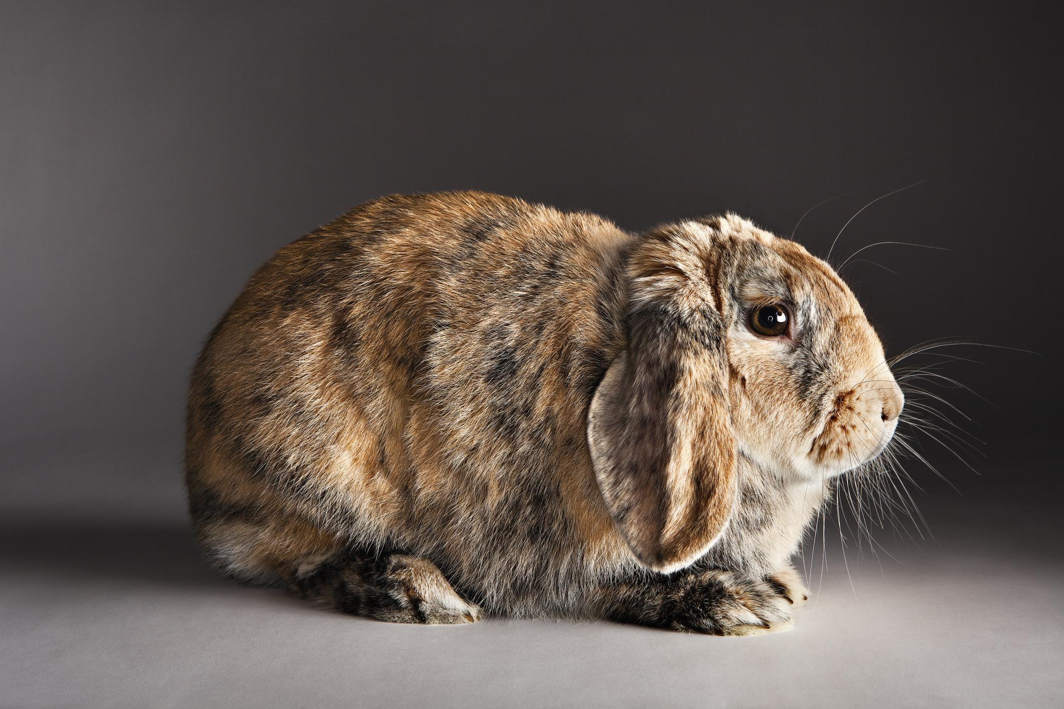Rabbit Communication Basics