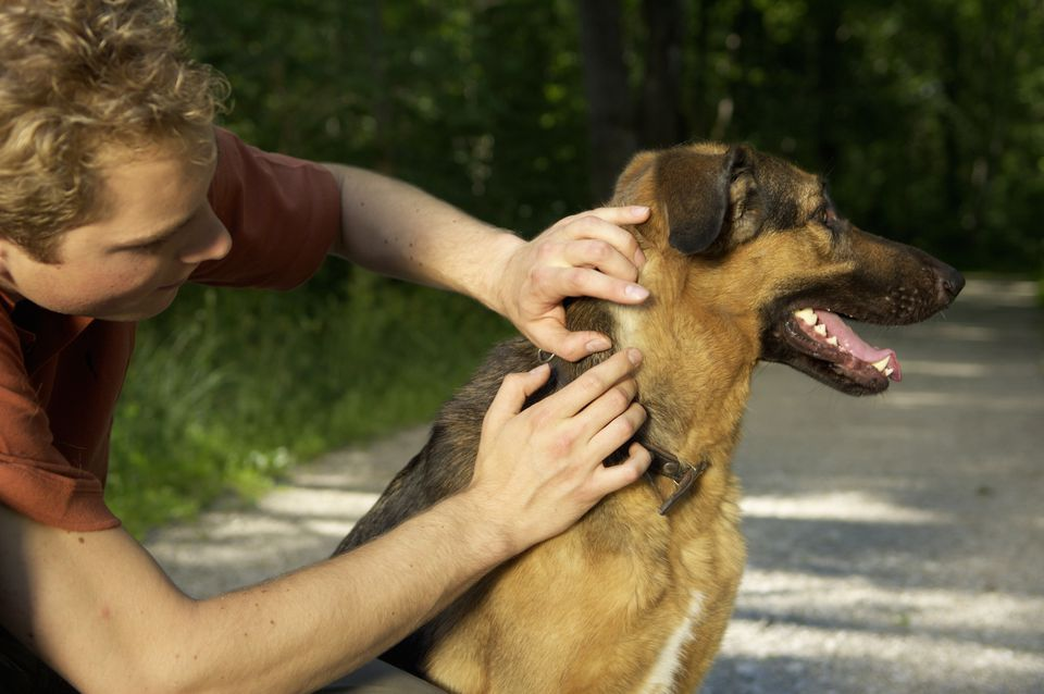 Young Man taking care of a dog