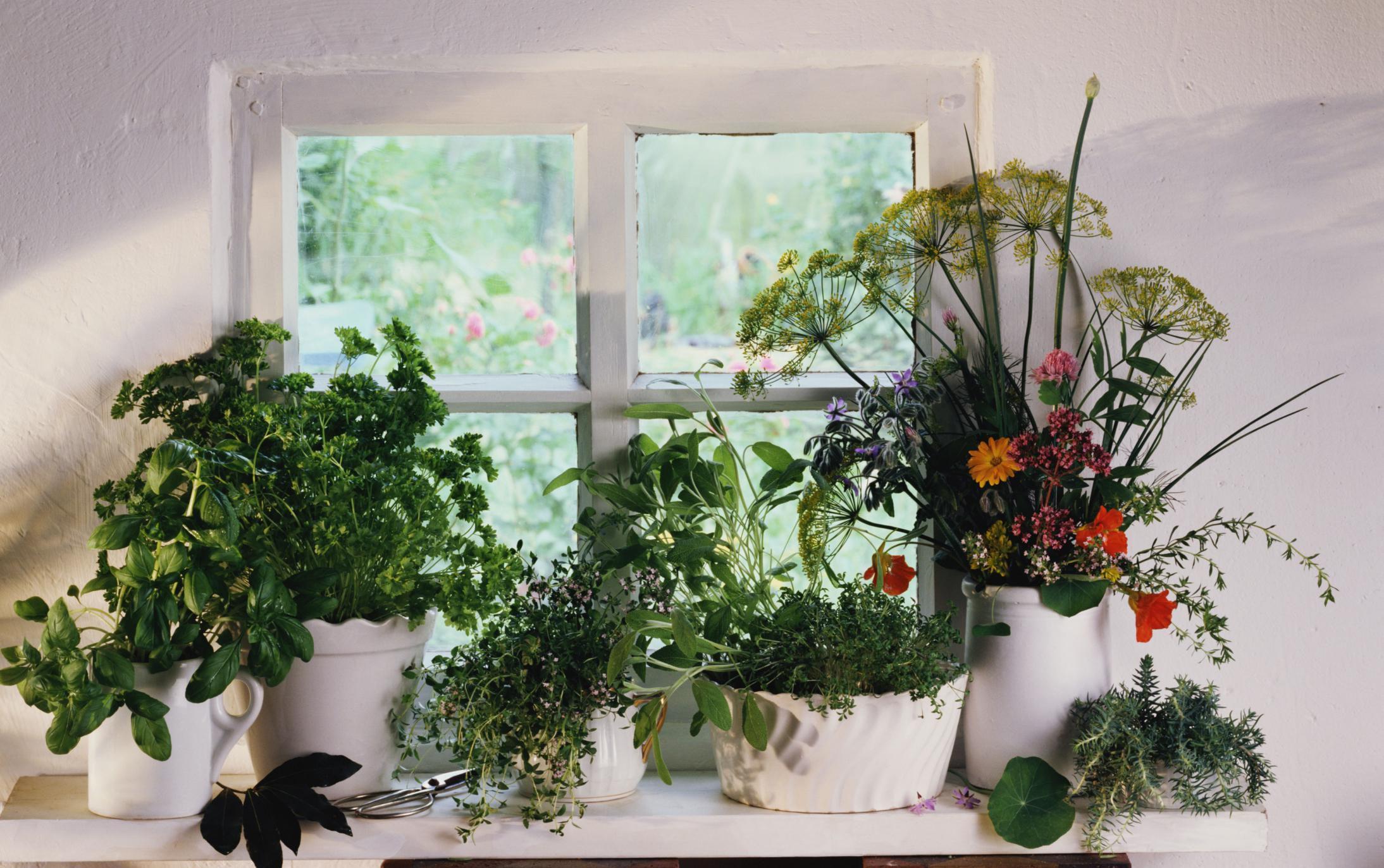 how to properly fertilize an indoor herb garden