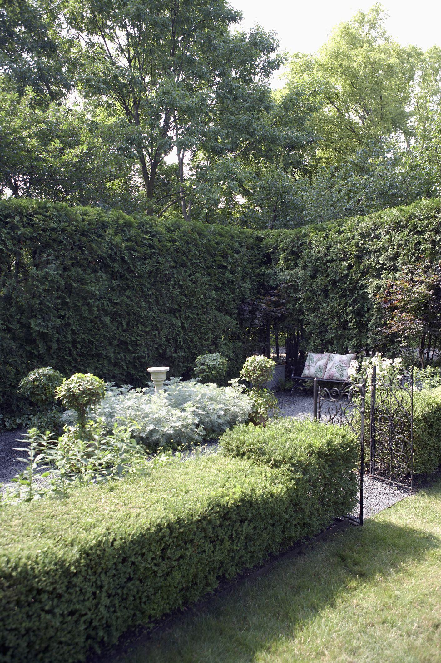 how to grow u0027emerald green u0027 arborvitae trees
