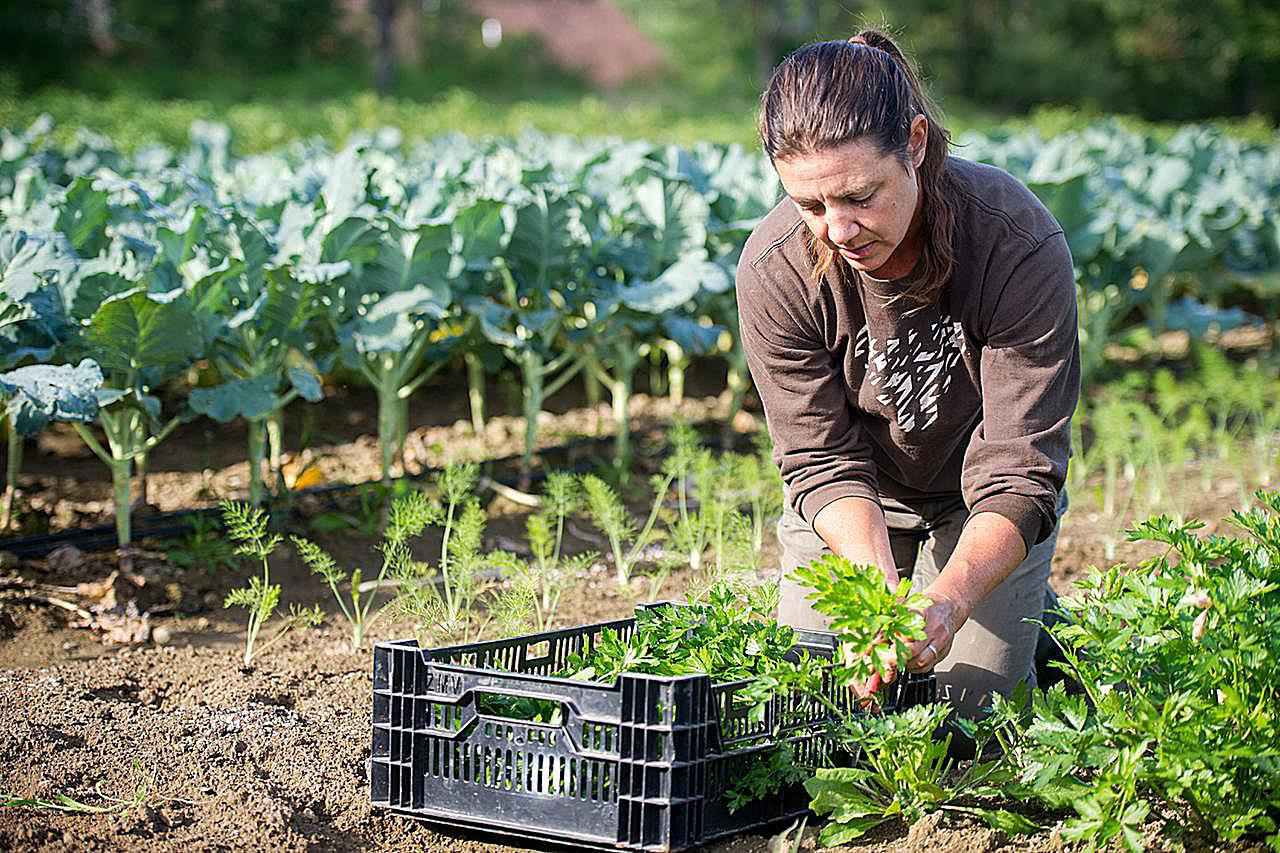 Top 10 Tips For Starting Your Hobby Farm