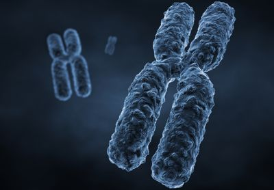 two kinds of sex chromosomes of a male in Leonora