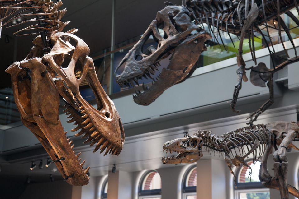 The Dinosaur Hall at the Natural History Museum of Los Angeles County