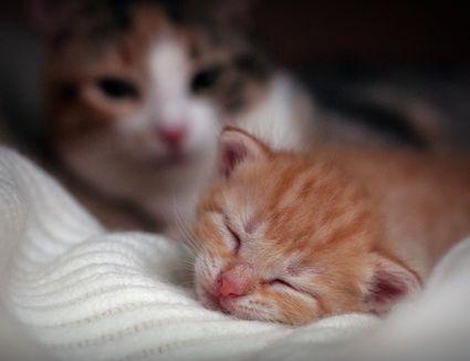 grumpy cat sibling